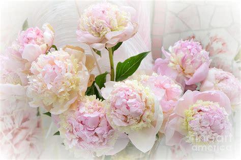 romantic shabby chic pink yellow peonies dreamy pink