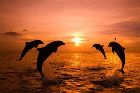 Set Jump Peace lol hair kisses disney food summer birds jesus god perri lmfao mickey