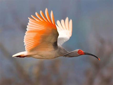 rare birds in the world