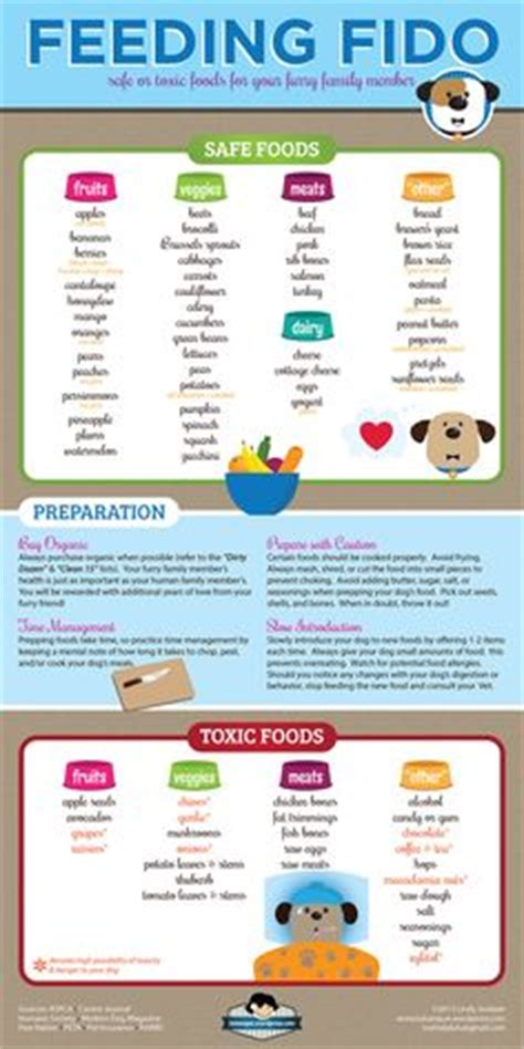 human food safe for dogs 1000 images about dogs infographic awesomeness on infographic your