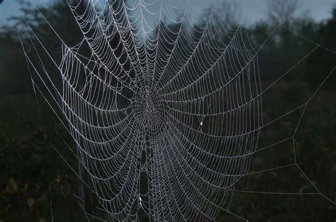 www web photo 1115 21 spider web near a pond in washington on the