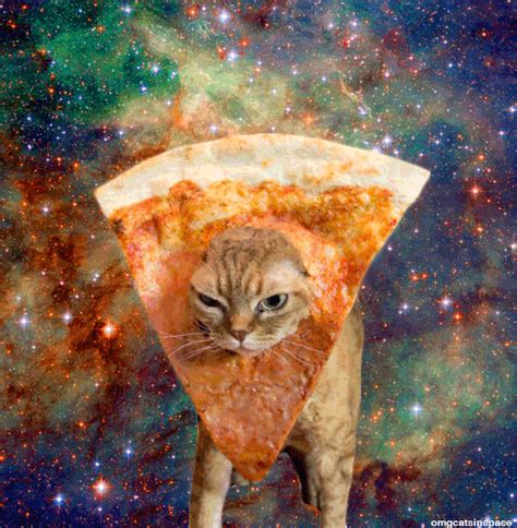 pizza kittens omg cats in space