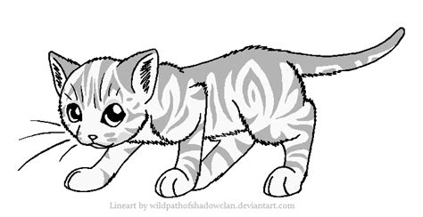 coloring pages of tabby cats shadowclan tabby lineart by wildpathofshadowclan on deviantart