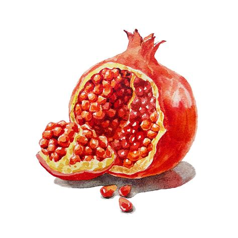 Home Decoration Paintings by Artz Vitamins A Pomegranate Painting By Irina Sztukowski