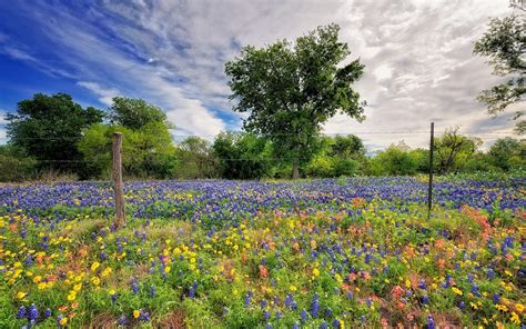 beautiful nature landscape in spring wallpapers and images spring wildflowers wallpaper