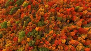 fall foliage the new york times