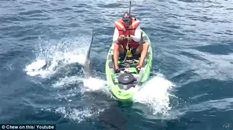 fishing boat attacked by shark megalodon shark attacks fisherman on kayak and he swims for his life