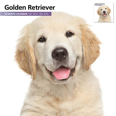 golden retriever gifts golden retriever gifts golden retriever calendars