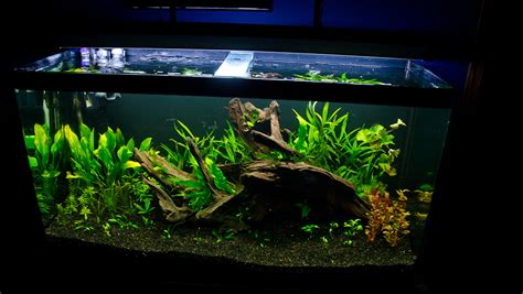 fluval chi aquascape the osaka forest page 5