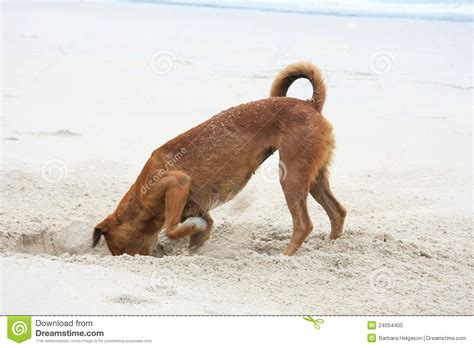 puppy digging digging stock photo image 24094400
