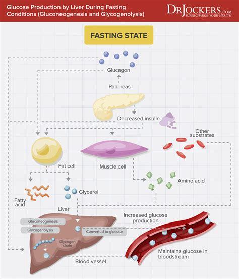 high fasting blood sugar  keto drjockerscom