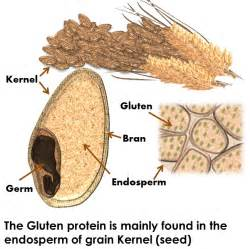 what s gluten and why should you care strides on your path