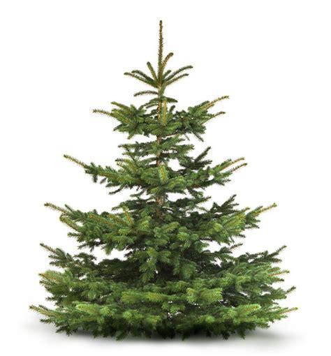 weihnachtsbaum fichte picea abies christbaum g 252 nstig