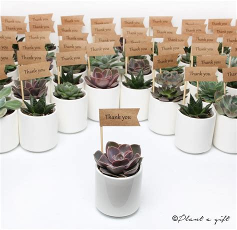 Wedding Gift Ideas Melbourne by Wedding Corporate Gifts Plant A Gift Melbourne Australia