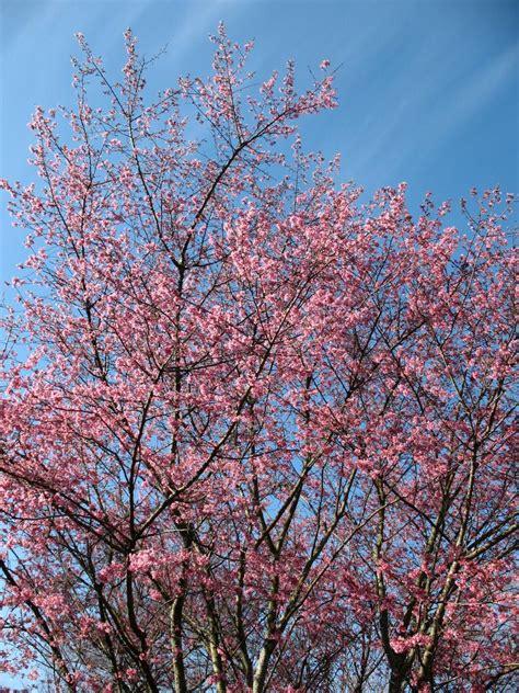 images  beautiful plants  bloom  winter diy