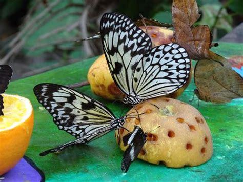casa farfalle montegrotto farfalla foto di casa delle farfalle e bosco delle fate