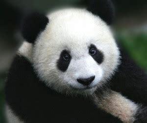 test animale sei risultato test animale sei panda