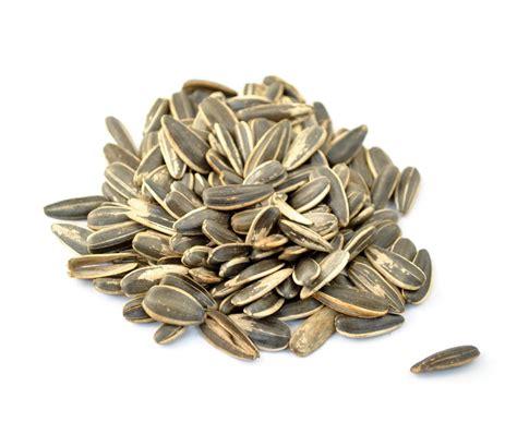 Shelf Of Sunflower Seeds by So I Keep It Like Sunflower Seeds And Quarter