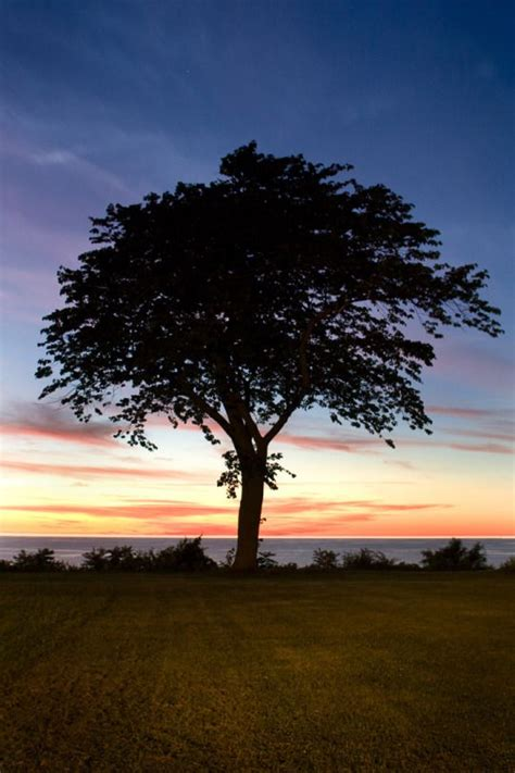 Lake Erie Lawn And Garden by 249 Best Images About Nature S Trees On