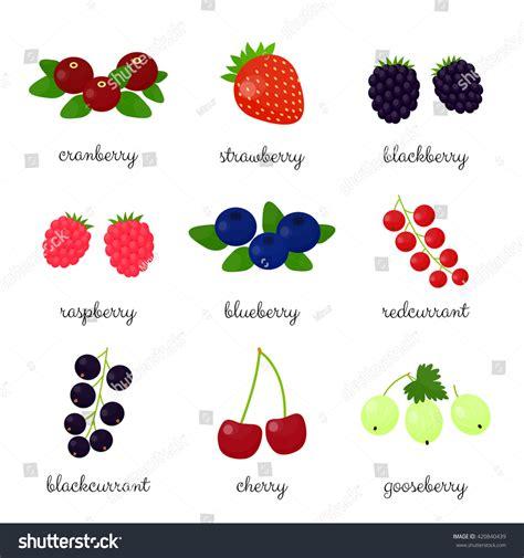 fruit vs berry berries names isolated on white stock vector