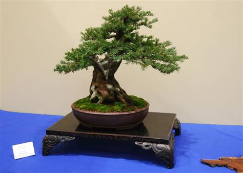 bonsai exhibit artfully designed miniature trees