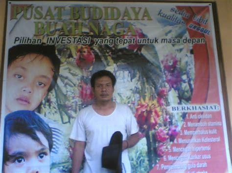 Bibit Buah Naga Di Jawa Timur jual bibit buah naga
