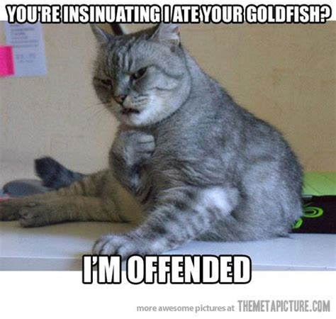 Cat Meme Images - youre insinuating i ate your goldfish jokes memes