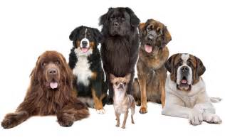 different puppies different types of dogs puppies quotes