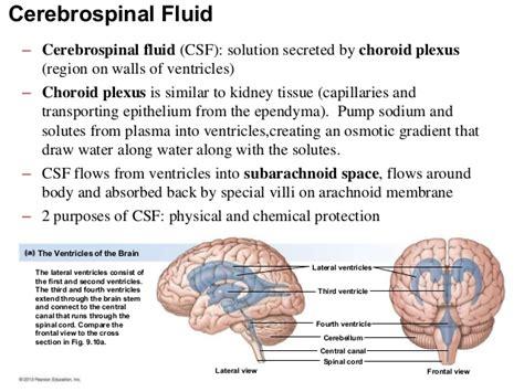 Detoxing The Csf by Ch 9 Nervous System 21 638 Drjockers