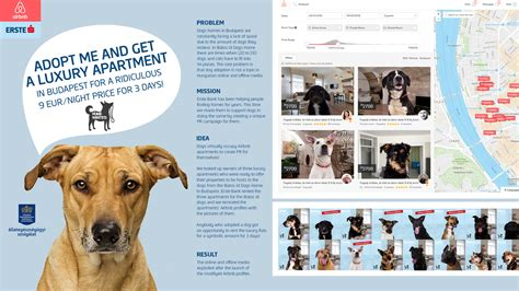 airbnb for dogs erste bank airbnb for adeevee