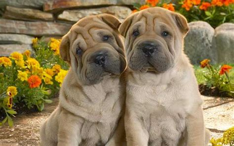 amazing free dog wallpapers to download graphicmania amazing free dog wallpapers to download graphicmania