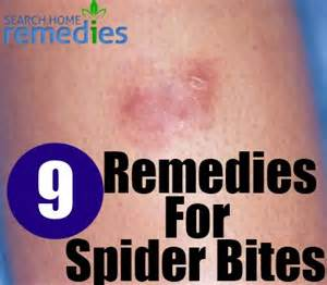 spider bites home remedy how to treat spider bites brown hairs