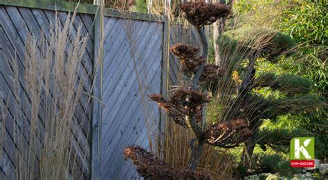 Garten Terrassen Aus Holz 728 by Palisaden Als Sichtschutz Kahoo De