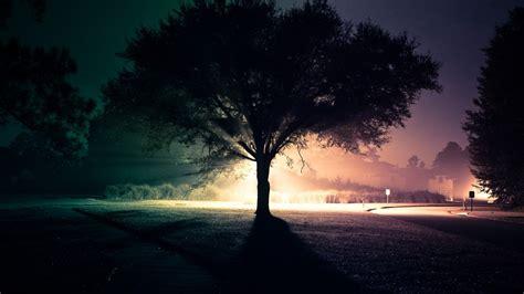 wallpaper dark life tree at night full hd pics wallpapers 4361 amazing