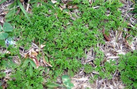 Sticker Weeds In Grass