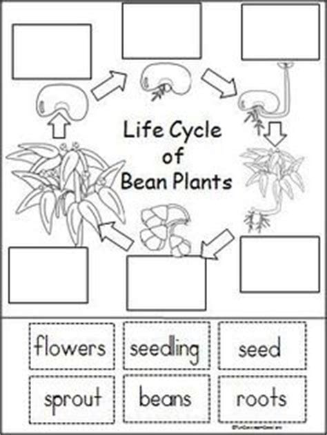 plant life cycle lesson plans for 2nd grade life cycle free plant life cycle worksheets and activity pack