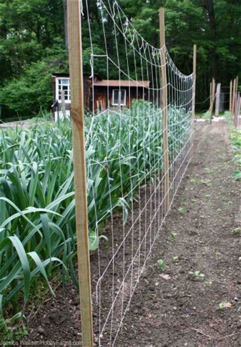 7 simple diy vertical gardening techniques for healthier