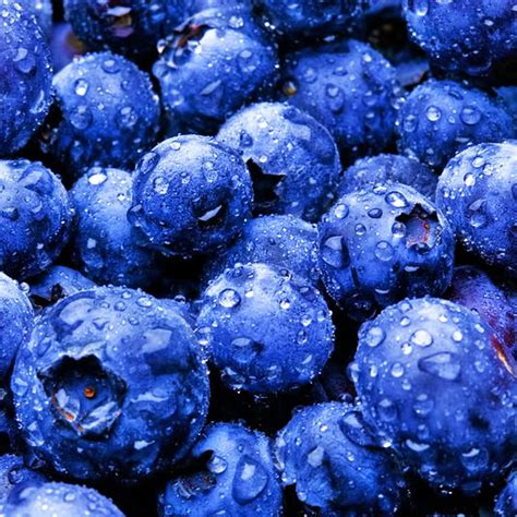 what color are blueberries blue blueberry colors photo 34682994 fanpop