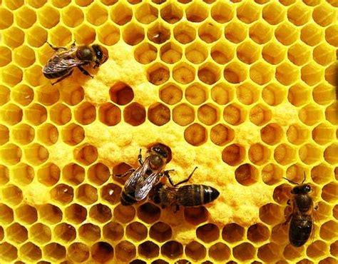 imagenes de estructuras naturales como iniciar a apicultura como manter uma colmeia de