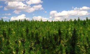 tips  growing  selling marijuana   pro