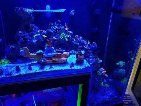 is lighting the reef tank with fluorescent lighting reef aquarium from malaysia under orphek led aquarium