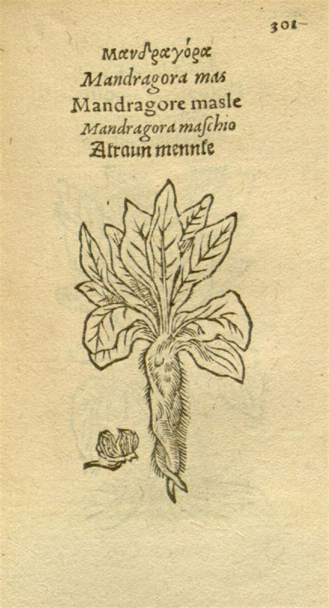 libro leonhart fuchs the new 435 best images about mandragora history and lore of the mandrake on first day