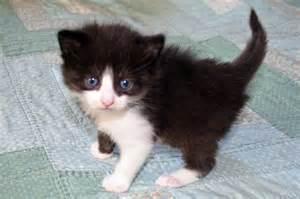 image gallery kittens at 3 weeks