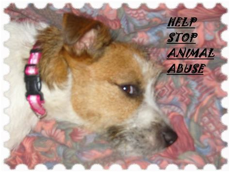 the puppy stop stop abusing the puppy teddybear64 photo 21923544 fanpop