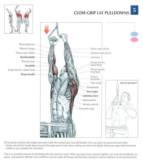 Grip United Grip Anatomy grip lat pulldowns repinned by crossed irons fitness chest excersises