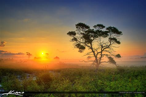 florida landscape during foggy morning sunrise