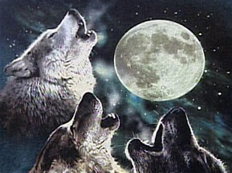 3 Wolf Moon Meme - three wolves howling at the moon www pixshark com