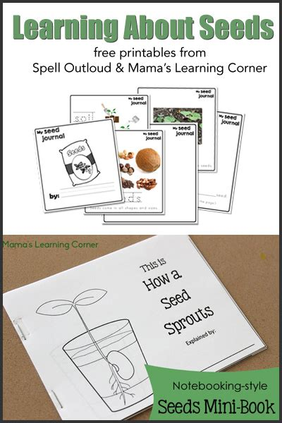 Display Book Sheet 20 Flower M0100 free studying seeds unit with printable mini book seed