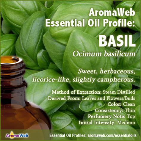 A Brief Profile Of A Few Essential Oils by Basil Essential Uses And Benefits Aromaweb