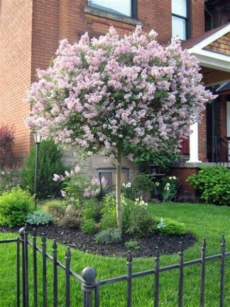 1000 ideas about small front yard landscaping on pinterest small front yards yard